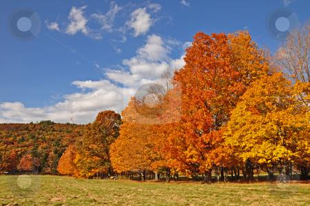 Autunm Scenes stock photo, Fall,trees,color,autunm,pretty,