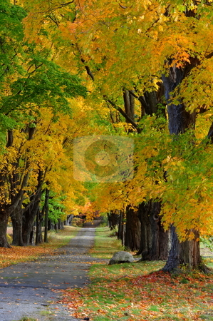 Autunm Scenes stock photo, Autunm shots of road by Richard Sheehan