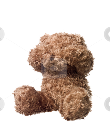 Shy Teddy bear stock photo, Shy Teddy bear isolated on white background by Anne-Louise Quarfoth