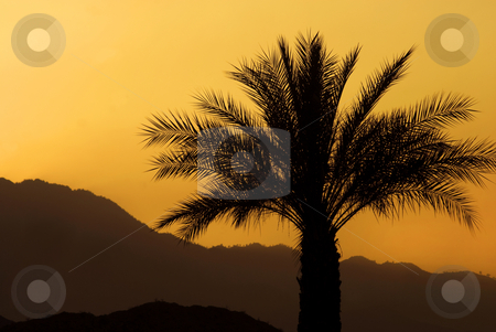 Palm Sunset stock photo, Sunset and a palm tree, Palm Springs, California. by Mary Lane
