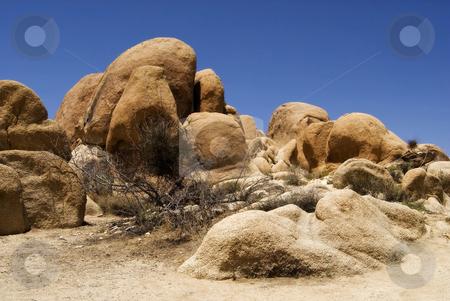 Joshua Tree stock photo, The desert landscape of Joshua Tree National Park, California. by Mary Lane
