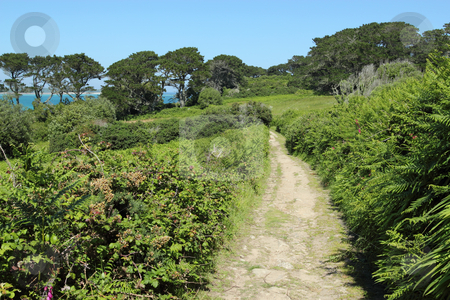 Country lane in St. Mary's Isles of Scilly. stock photo, Country lane in St. Mary's Isles of Scilly. by Stephen Rees