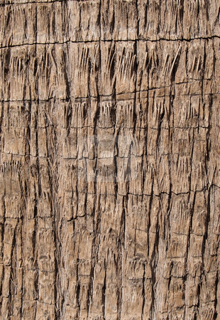 Rough brown palm tree wood bark natural texture background. stock photo, Rough brown palm tree wood bark natural texture background. by Stephen Rees