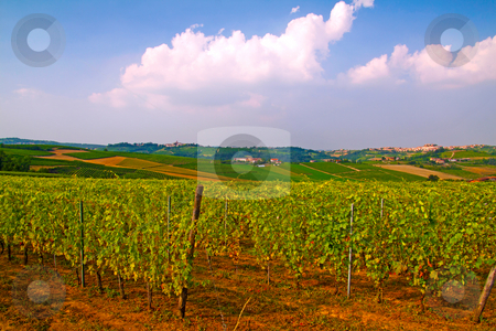 Vineyard stock photo, Landscape of a vineyard under cloudy sky by Fabio Alcini