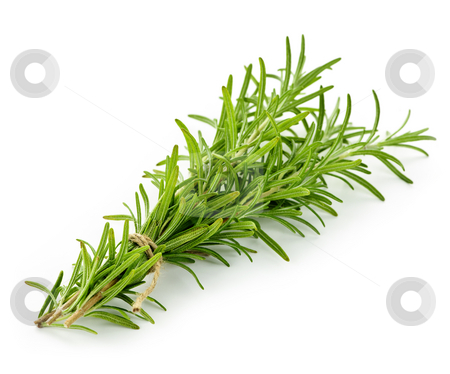Rosemary sprigs stock photo, Rosemary sprigs tied in bundle isolated on white background by Elena Elisseeva