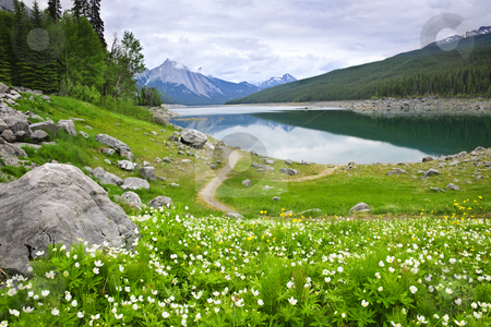 Mountain lake in Jasper National Park, Canada stock photo, Wildflowers on the shore of Medicine Lake in Jasper National Park,  Canada by Elena Elisseeva