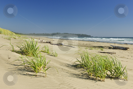 Ocean shore in Pacific Rim National park, Canada stock photo, Sand dunes on Long Beach in Pacific Rim National park, Canada by Elena Elisseeva