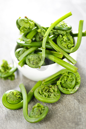 Fiddleheads stock photo, Fresh spring wild fiddleheads in a bowl by Elena Elisseeva