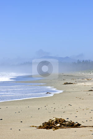 Coast of Pacific ocean in Canada stock photo, Long Beach in Pacific Rim National park, Canada by Elena Elisseeva