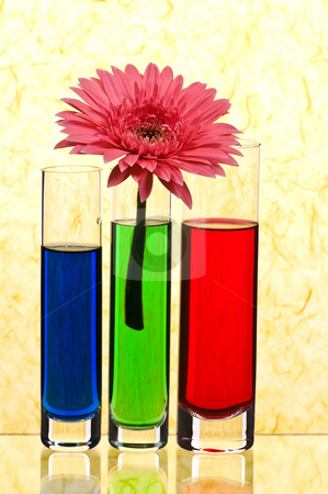 Gerbera stock photo, Vases with multi-coloured water on yellow background by Salauyou Yury