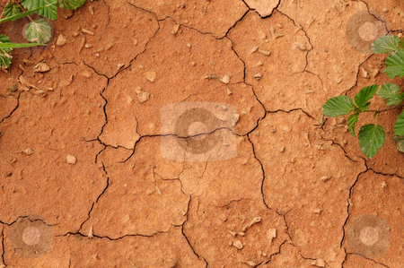 Crack stock photo, Dry sand cracking up along with some greenery by Arvind Balaraman