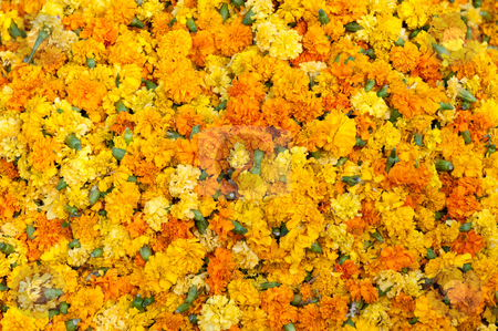 Flowers stock photo, Collection of frehly bloomed yellow flowers by Arvind Balaraman