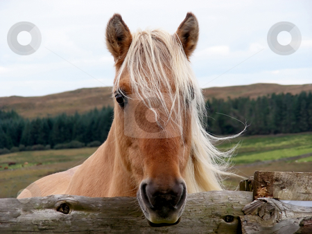 Horsie stock photo, Hi - look at me, I'm a pretty horse. by Mary Lane