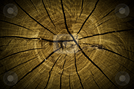 Tree stump texture stock photo, Macro texture of the old stump for background by Vladimir Gladcov
