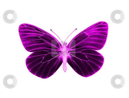Alien butterfly stock photo, Alien butterfly by Robert Biedermann