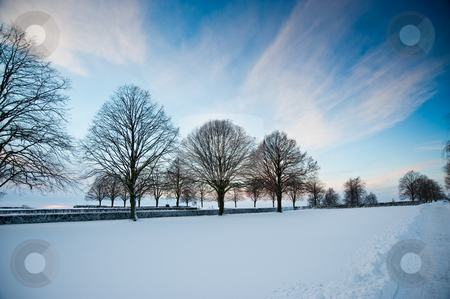 Winter stock photo, Trees and snow by Jaime Pharr