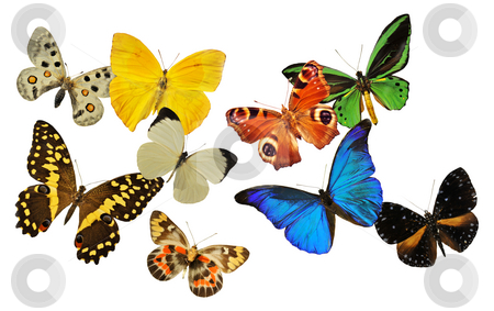 Group of butterfly stock photo, Group of  butterfly in front of white background by Bonzami Emmanuelle