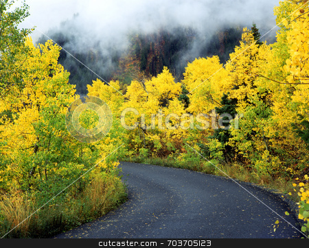Aspen Road stock photo, An asphalt road through a foggy aspen forest. by Mike Norton