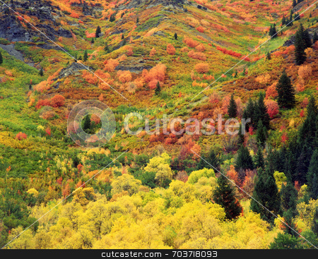 Autumn Tapestry stock photo, Fall colors on the side of a mountain in Utah. by Mike Norton