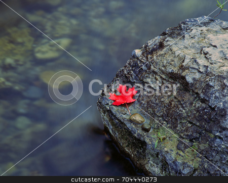 Canyon Maple Leaf stock photo, A canyon maple leaf on a rock in the Logan River, Utah. by Mike Norton