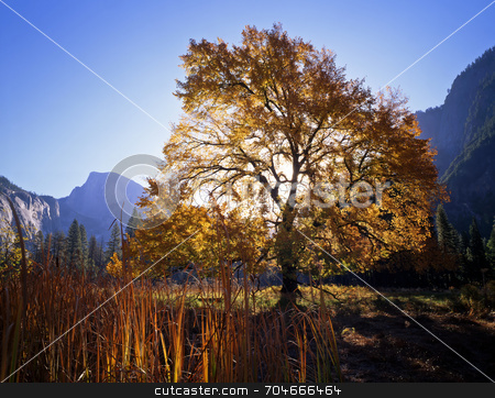 English Elm and Half Dome stock photo, An English Elm and Half Dome tree in Yosemite national Park, California. by Mike Norton