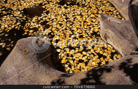 Floating Leaves stock photo, Leaves floating on a pond. by Mike Norton