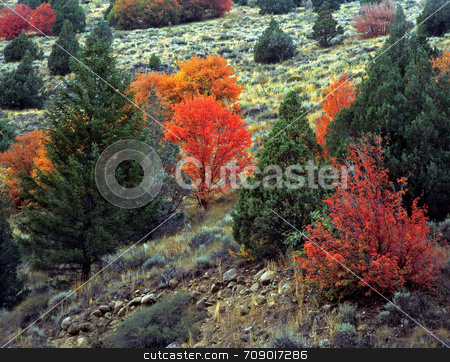 Logan Canyon Hillside stock photo, Colorful plants on a hillsise, photographed during the autumn season, in Logan Canyon, Utah. by Mike Norton