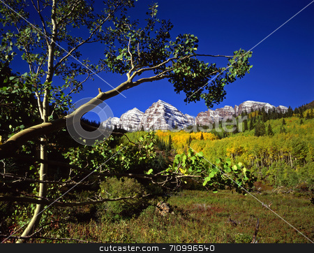 Maroon Bells and Branch stock photo, Aspen trees and the twin peaks of the Maroon Bells in the White River National Forest of Colorado. by Mike Norton