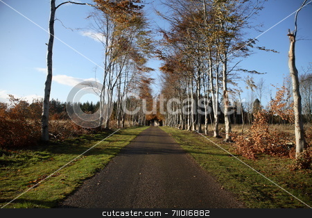 Path to Castle stock photo, A path leading to Brodie Castle, Scotland. by Daniel Wiedemann