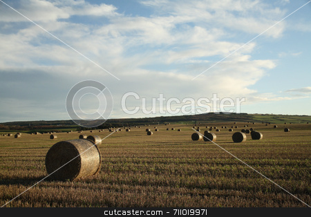 Hay Field stock photo, A field in the Highlands of Scotland with hay bales everywhere, on a late evening. by Daniel Wiedemann