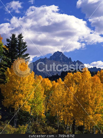 Mt. Sneffels and Aspens stock photo, Mt. Sneffels and aspen trees in the Uncompahgre National Forest of Colorado, photographed during the autumn season. by Mike Norton
