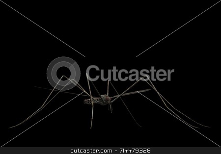 Mosquito stock photo, A mosquito close-up and isolated on a black background. by Daniel Wiedemann