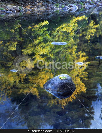 Rock and Leaf Merced River stock photo, An oak leaf on a rock in the Merced River located in Yosemite National Park, California. by Mike Norton