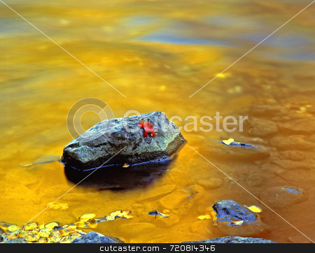 Logan Canyon stock photo, A canyon maple leaf on a rock in the Logan River in the Wasatch-Cache national Forest, Utah. by Mike Norton