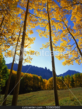 Yellow Forest Clearing stock photo, A clearing in the Uncompahgre National Forest of Colorado. by Mike Norton