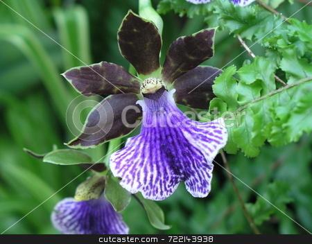Purple Iris stock photo,  by Mark Bernas