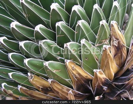 Cactus stock photo,  by Mark Bernas