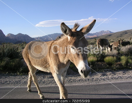 Wild donkey stock photo,  by Mark Bernas