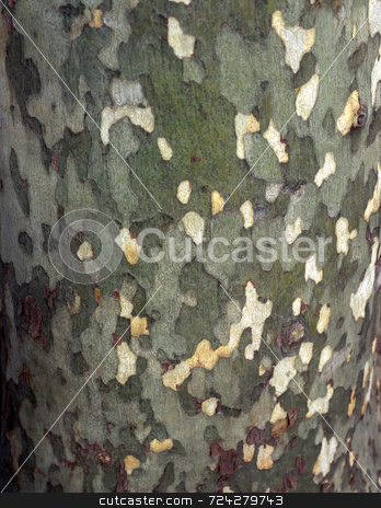 Tree Bark stock photo, The bark of a tree photographed up close. by Mike Norton