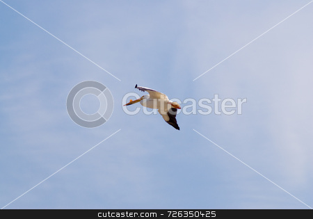 Flying Pelican stock photo, A pelican flying high in a blue sky by Richard Nelson