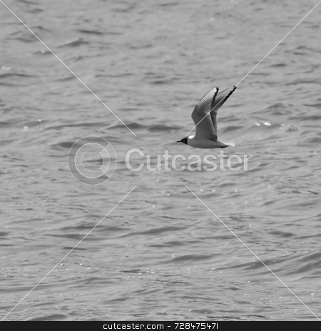Freedom stock photo, A small bird flying peacefully over a body of water by Richard Nelson