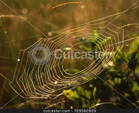 Spider Web stock photo, Spider web by Mike Norton
