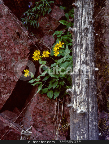 Wild Flowers & Red Granite stock photo, flowers growing by a log and red granite. by Mike Norton