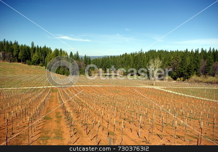 New Vineyard stock photo, A new Vineyard at early spring in the El Dorado Country foothills by Lynn Bendickson