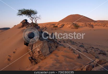 Stones And Acacia In The Desert stock photo, Stones and Acacia in the Desert on an Evening by Jan-Peter Von Hunnius