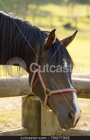 Horse's head stock photo, A horse's head with enclosure in a farm by Massimiliano Leban