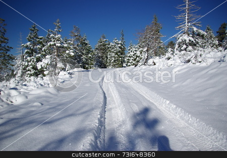 Tire tracks in fresh snow stock photo, Tire tracks in fresh snow on an empty mountain trail by Lynn Bendickson