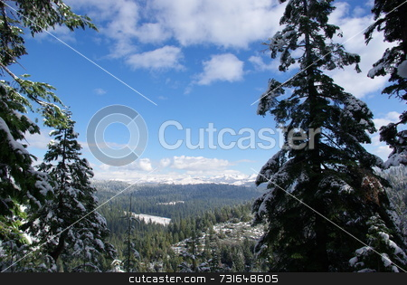 View through trees stock photo, Trees covered in fresh snow looking towards the Sierra Crystal Range by Lynn Bendickson