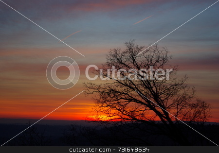Sunset horizon stock photo, Bare branches silhouetted against a Sierra sunset by Lynn Bendickson