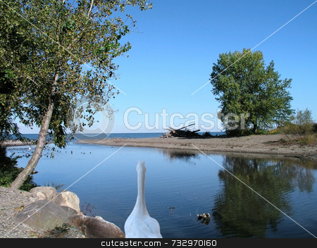 White Goose at Inlet stock photo, White goose on rocks at inlet at Silver Creek NY USA. Height of summer with Lake Erie blue water, great blue sky, and green trees. by ngirl